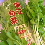 高知の在来野菜「潮江菜」 2016/11/1